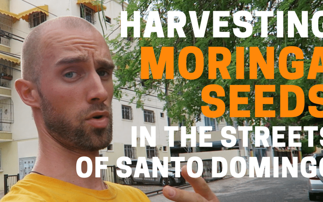 VLOG #4: Harvesting Seeds of the Moringa Miracle Tree in Santo Domingo