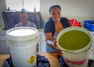 The Growing Dutchman - Haiti Moringa - AFASDAH Women Coop-8