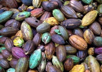 Cacao @Finca Barranca