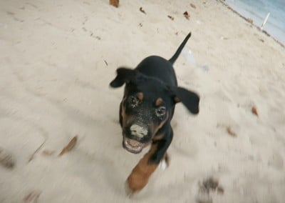 Django @8 Weeks - Running on Beach