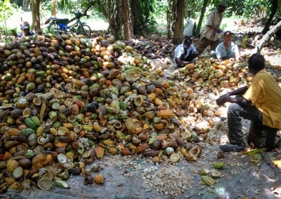 Sorting Cacao @Finca Barranca