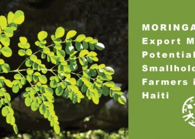 The Growing Dutchman Moringa market study Haiti