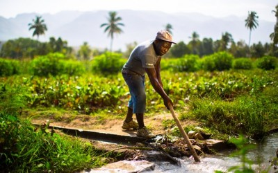 Haiti Cotton Study Featured in The Guardian!
