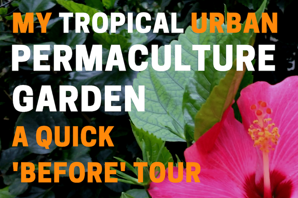 VIDEO – My Tropical Urban Permaculture Garden (A Quick 'Before' Tour)