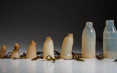 Icelandic Student Creates Biodegradable 'Plastic' Bottles from Algae