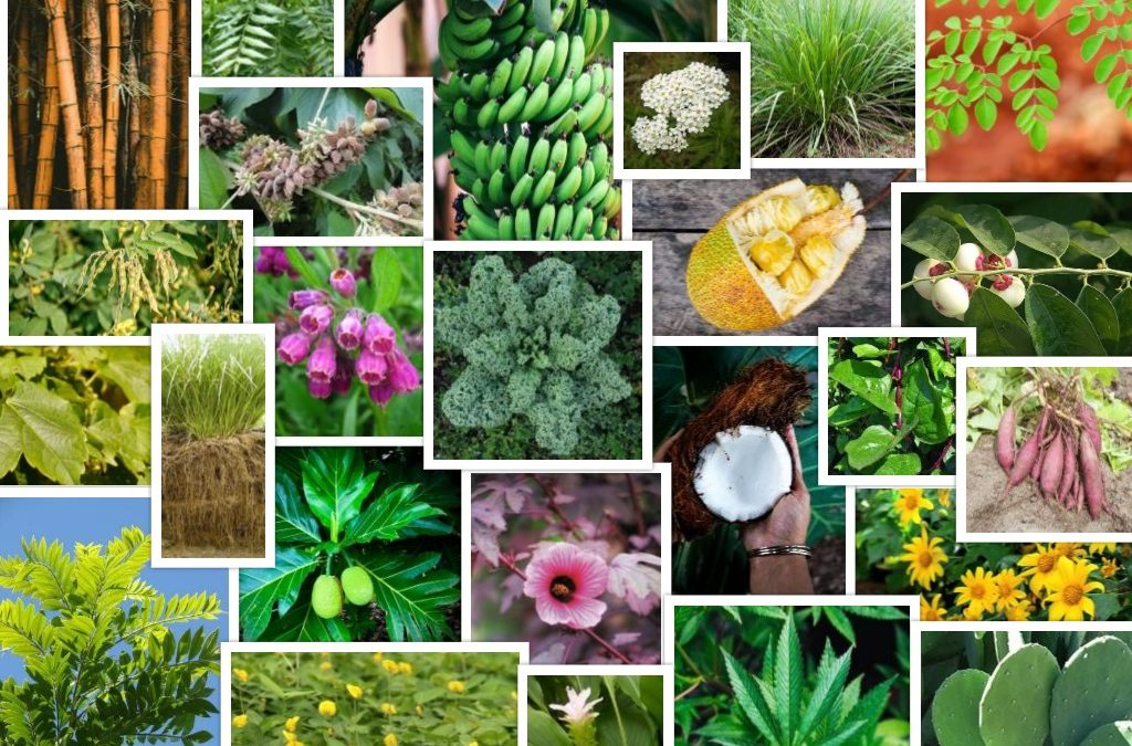 My Top 25 All-Star Tropical Permaculture Plants