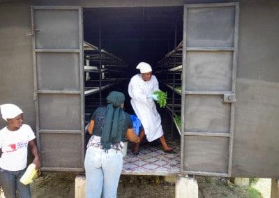 The Growing Dutchman - Haiti Moringa - AFASDAH Women Coop-7