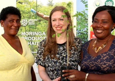 Haiti Moringa Project: Producing Superfood from a Miracle Tree