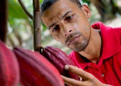 The Growing Dutchman - Tres Hombres Boat Struvite Project Dominican Republic Sustainable Fertilizer Ostara Water Waste Treatment Circular Economy Zero Waste Zero Emission Cargo Organic Cacao Field Trials