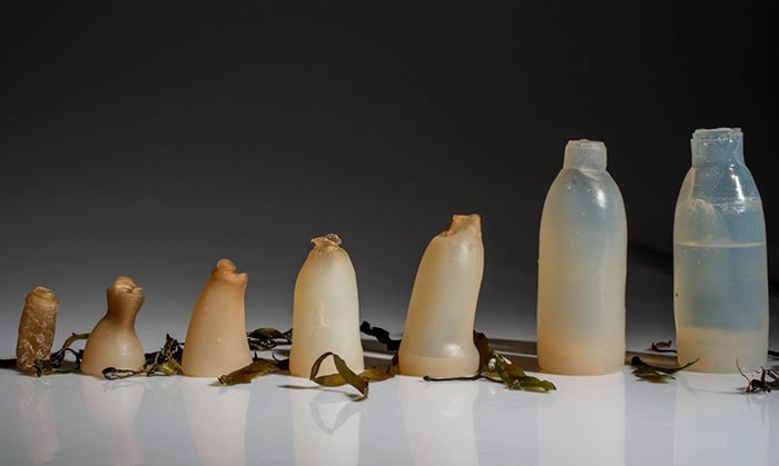 Icelandic Student Creates Biodegradable 'Plastic' Bottles from Algae