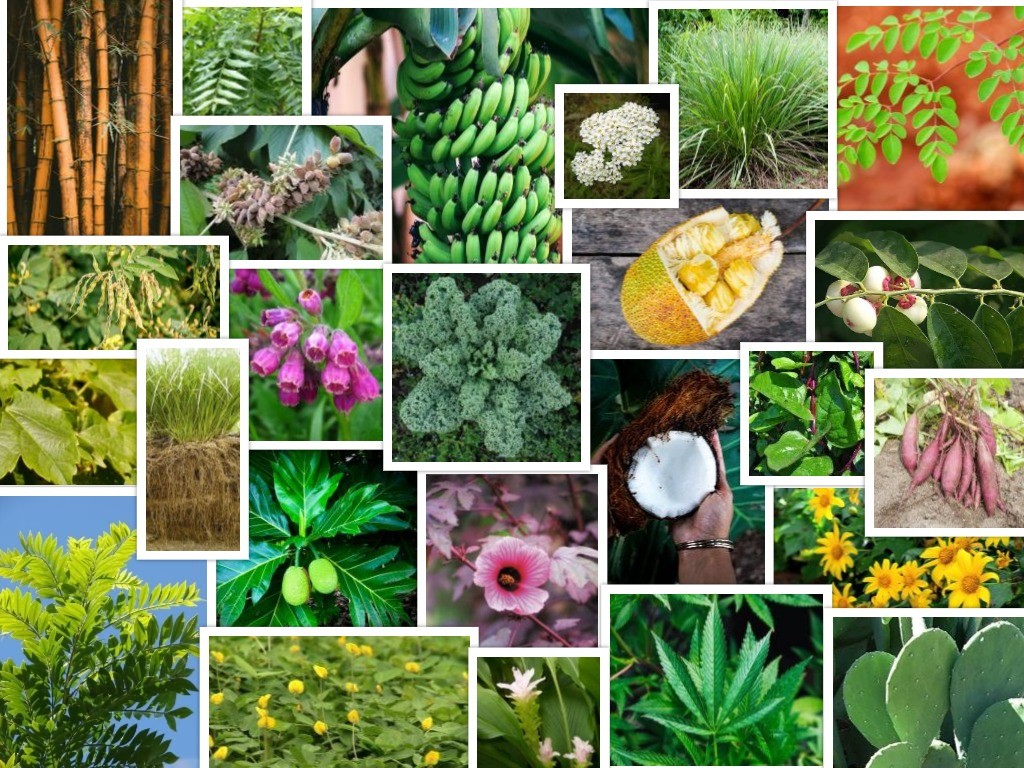 My Top 25 All Star Tropical Permaculture Plants The Growing Dutchman